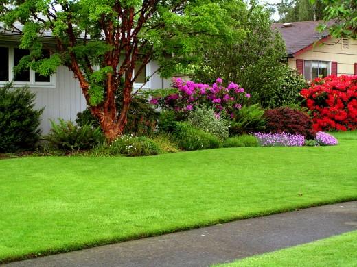 Какой газон лучше