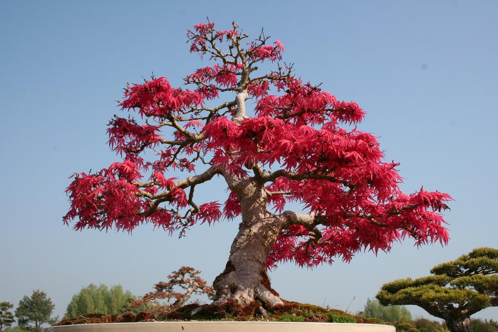 фото дерева китай рулит каждого