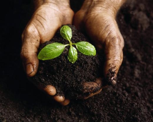 Человечество от вымирания отделяют 20 см плодородной почвы
