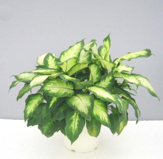 Комнатные растения способствуют здоровому микроклимату в помещении