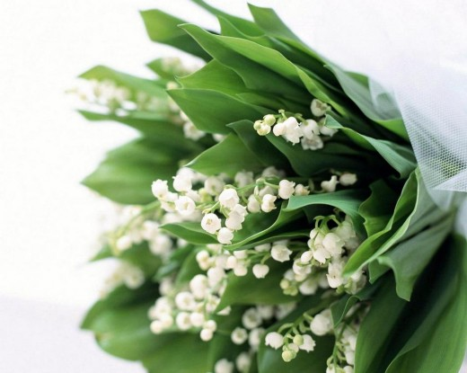 Прежде чем дарить цветы, снимите с них обертку