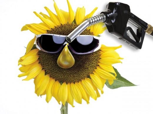 Биотопливо вреднее бензина, объявил Greenpeace