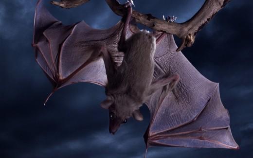 Новый вирус гриппа A обнаружен у летучих мышей