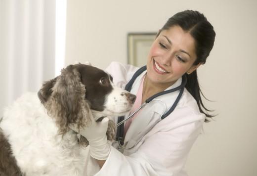Ветеринар на дом: основные преимущества