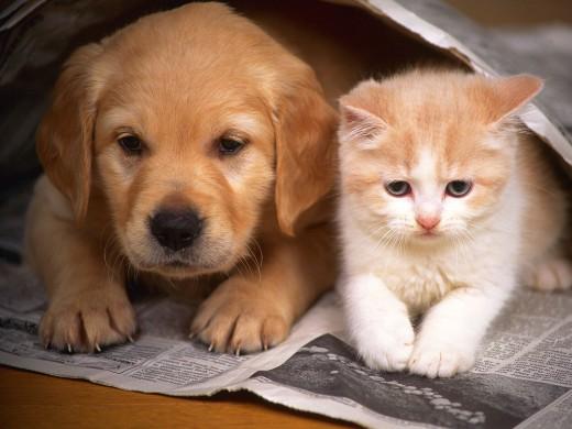 Ваша забота о животных – это покупка качественных товаров