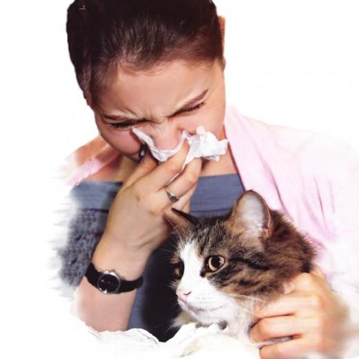 Кое-что о котах и их хозяевах-аллергиках
