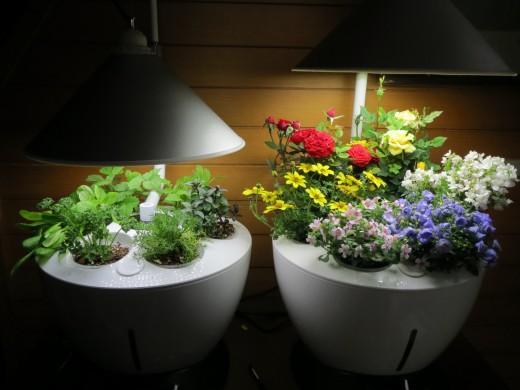 В чём преимущества покупки светодиодных ламп для растений в интернет-магазине