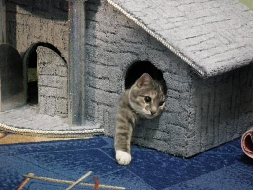 Как выбрать игровой домик для домашней кошки