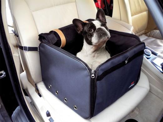Транспортировка травмированной собаки
