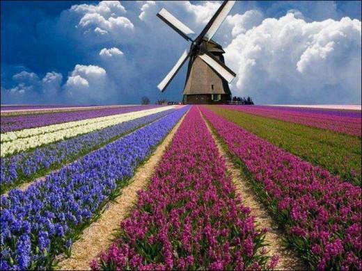 Мобильный интернет в Нидерландах