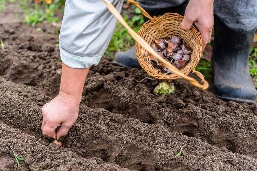 Подзимний сев - весной будет урожай