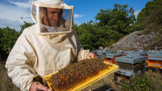 Пчеловодство сегодня – где купить необходимые вещи для старта пасеки?
