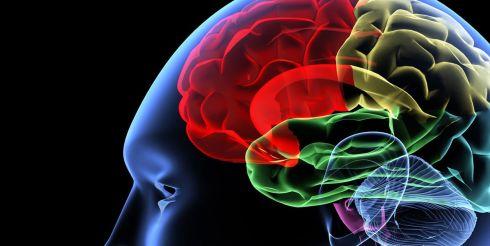Самое удивительное о мозге