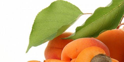 Эликсир долголетия — абрикосы