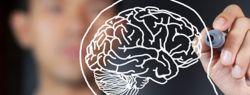 Восприятие мира влияет на работу головного мозга