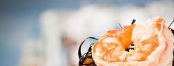 Кулинарные изыски: насмешка или благо?