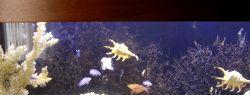 Если хотите купить морской аквариум
