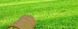 Из чего складывается цена на укладку газона?