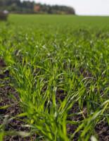 Что важно для повышения качества урожая?