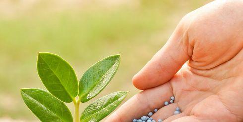 Какие стимуляторы роста растений купить?