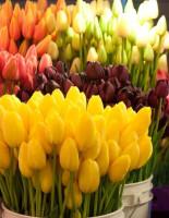 Где заказать цветы с доставкой