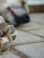Коронавирус и домашние животные: как уберечь себя и питомца