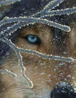 Фотореалистичные картины художника Коллина Богля