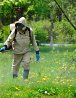 Дезинсекция — борьба с насекомыми на современном уровне