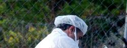 Ученые вывели трансгенных кур для борьбы с распространением гриппа