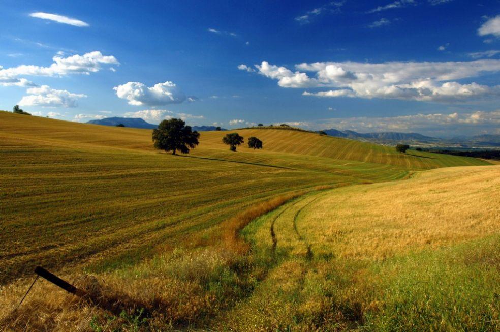 Пшеничные поля в Гранаде