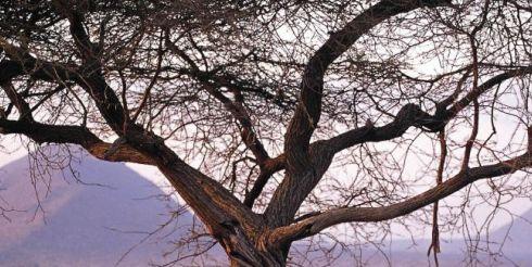 Кения борется с нехваткой средств
