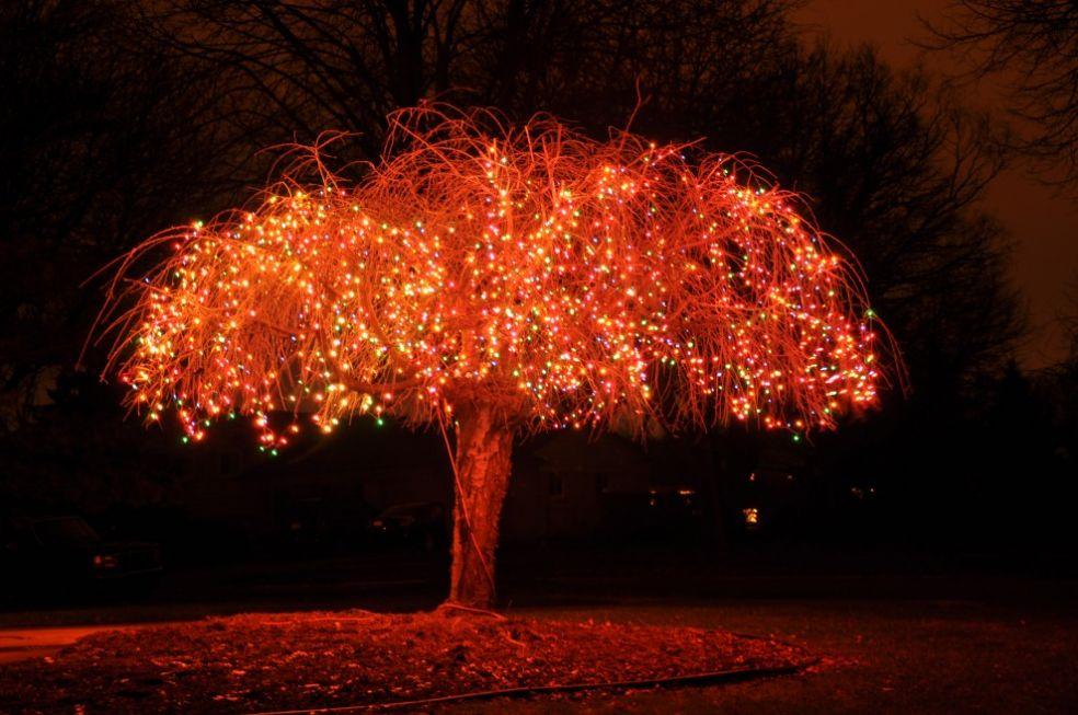 Рождественские елки в ботаническом саду в Бронксе