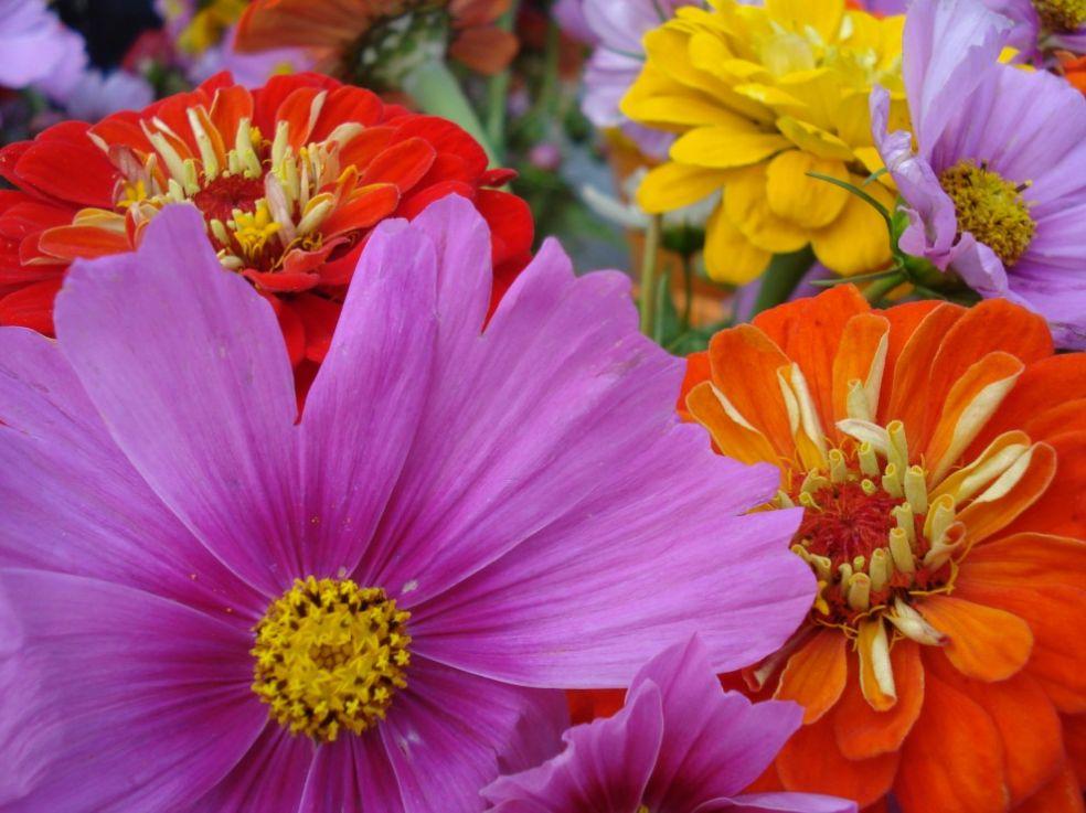 Цветы для холерика