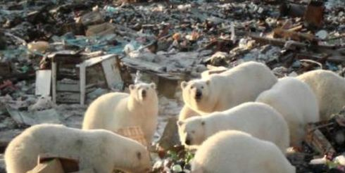 В Арктике проведут генеральную уборку