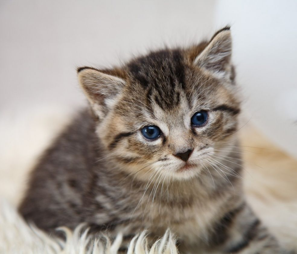 Особенности котят