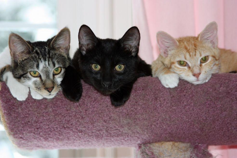 Почитание кошек