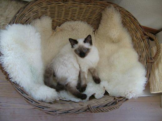 Кошки на фото