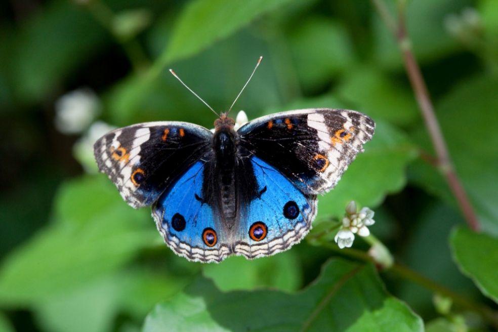 В Пинангском парке бабочек, Малайзия
