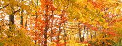 В отпуск осенью: где в Европе отдыхать хорошо