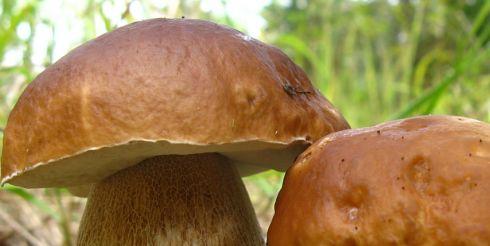 И все-таки грибы