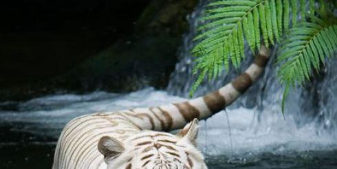 Встречаем 2010 год — год Металлического Тигра